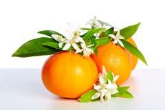 Sinaasappelen met oranje bloesembloemen op wit Stock Afbeelding