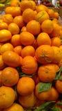 Sinaasappelen op vertoning Stock Afbeeldingen