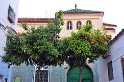 Sinaasappelen voor huizen in Chefchaouen stock afbeeldingen