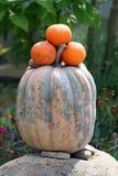 Sinaasappelen voor verkoop Royalty-vrije Stock Afbeeldingen
