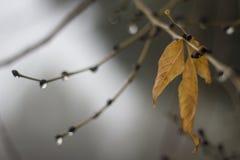 Sinaasappelenbladeren in de herfst stock afbeeldingen