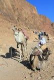 Sinai imagem de stock royalty free