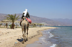 Sinai beach. Stock Image