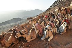 Sinai Bergmening stock fotografie