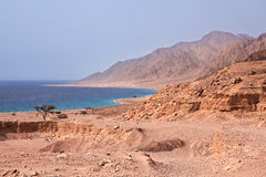 Sinai coast. Red Sea. Stock Image