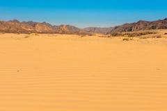 Sinai desert landscape Stock Photography