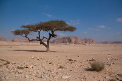 Sinai desert with sand and sun under blue sky in december with t Stock Photography