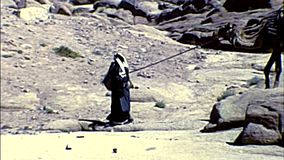 Archival beduin with camel in Egypt. Sinai, Egypt - 1979: beduin with camel at St. Catherine Monastery in the Sinai Peninsula, the oldest Christian Monastery of stock video