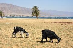 Sinai seashore. Stock Images