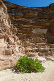 Sinai-Wüste, farbige Schlucht Stockbilder