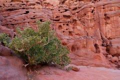 Sinai woestijn met zand en zon onder blauwe hemel in december met g Stock Foto's