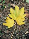 Sinais da queda - folhas no assoalho Imagem de Stock Royalty Free