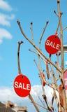 Sinais da venda que penduram em ramos de árvore Fotografia de Stock Royalty Free