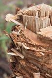 Sinais de árvores cortadas. Corte tradicional. Fotografia de Stock Royalty Free