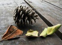 Sinais de autumn-2 Imagem de Stock