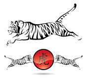 Sinais isolados do tigre Foto de Stock Royalty Free