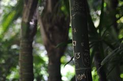 Sinais no bambu no jardim zoológico Imagem de Stock