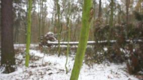 Sinal - árvore caída filme