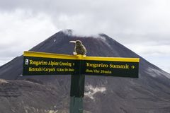 Sinal amarelo do guidepost do turista no cruzamento alpino de Tongariro da grande caminhada Na desgraça do Mt do vulcão ativo do  Fotografia de Stock