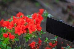 Sinal ao lado de algumas flores vermelhas Fotos de Stock Royalty Free