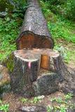 Sinal cor-de-rosa com pintura à pistola no tronco de árvore puxado para baixo fotografia de stock