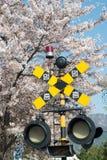 Sinal Coreia do cruzamento railway de jinhae da flor da mola Imagem de Stock Royalty Free