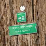 Sinal da árvore do Redwood imagem de stock royalty free