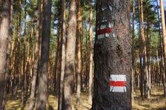 Sinal da fuga de caminhada em uma árvore Fotografia de Stock Royalty Free