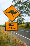 Sinal de estrada que indica cangurus adiante austrália foto de stock royalty free