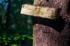 Sinal de madeira no tronco de árvore, na seta e no ` do toalete do ` imagem de stock