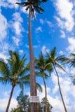 Sinal de queda dos cocos Beware of Fotografia de Stock