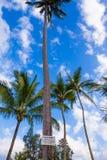 Sinal de queda dos cocos Beware of Fotografia de Stock Royalty Free