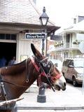 Sinal de rua de Bourbon com mula Nova Orleães Foto de Stock Royalty Free