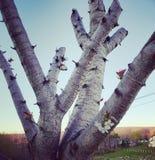 Sinal de vida para a árvore proximamente aparada Fotografia de Stock Royalty Free
