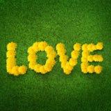 Amor feito dos dentes-de-leão Imagens de Stock Royalty Free
