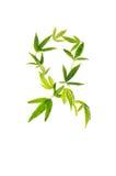 Sinal do câncer da luta feito das folhas da marijuana Fotografia de Stock Royalty Free