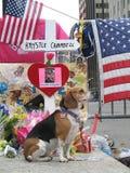 Sinal 2013 do memorial da maratona de Krystle Campbell Boston Foto de Stock Royalty Free