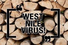 Sinal do texto que mostra Nile Virus ocidental A causa conceptual da infecção viral da foto espalhou tipicamente pelos mosquitos  fotografia de stock royalty free