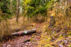 Sinal do turista na árvore abatida na floresta profunda Dezorientation e na maneira errada foto de stock royalty free