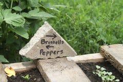 Sinal feito a mão do jardim de Bruxelas e de pimentas Imagens de Stock Royalty Free