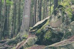 Sinal pintado no tronco de árvore na floresta que caminha o trajeto imagem de stock royalty free