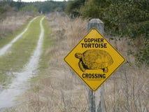 Sinal posto em perigo do cruzamento da tartaruga de Gopher Fotos de Stock