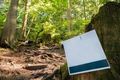 Sinal vazio ao lado de uma fuga sempre-verde da floresta fotos de stock