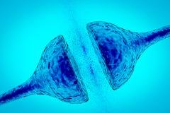 Sinapse entre da relação neural do neurônio de dois receptors da sinapse dos neurônios a rede neural Foto de Stock