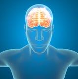 Sinapsi dei neuroni del cervello Fotografia Stock Libera da Diritti