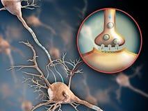 Sinapsis de la neurona Foto de archivo libre de regalías