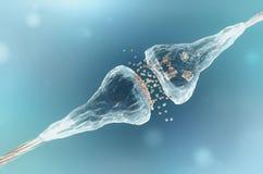Sinapsis y neurona Fotografía de archivo