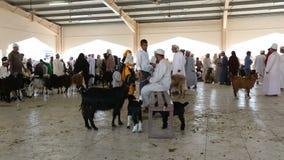 Sinaw, Omán - diciembre de 2015: Gente árabe que compra y que vende animales en el mercado de Sinaw metrajes