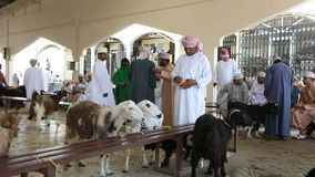 Sinaw, Omán - diciembre de 2015: Gente árabe que compra y que vende animales en el mercado de Sinaw almacen de video
