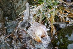 Sincelo e o caracol congelado Fotos de Stock